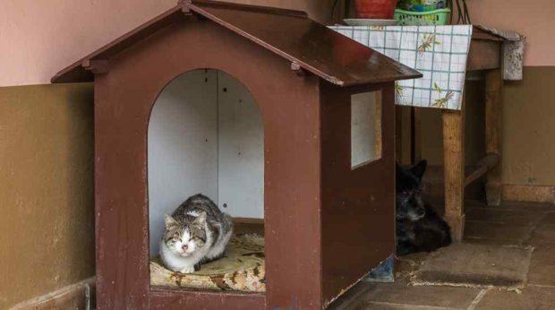 Una caseta para el gato