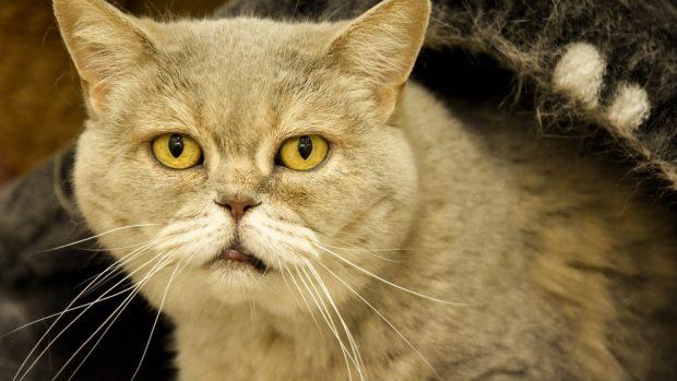 Carácter de tu gato con los años