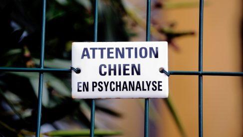 Causas para llevar tu mascota al psicólogo