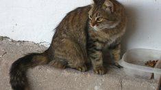 Los movimientos de la colal del gato