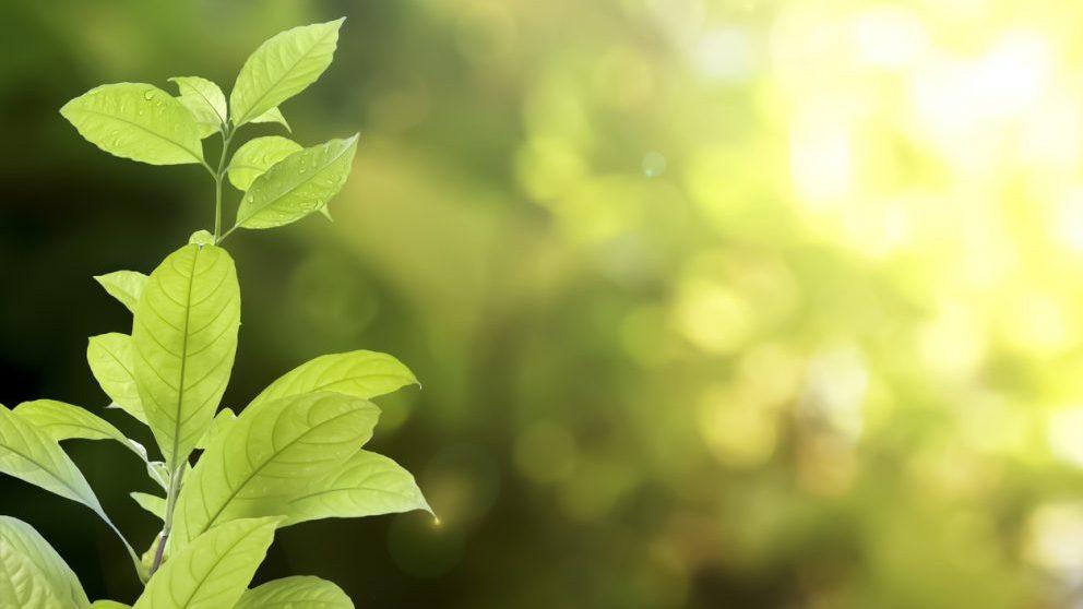 Revolución Verde @Istock
