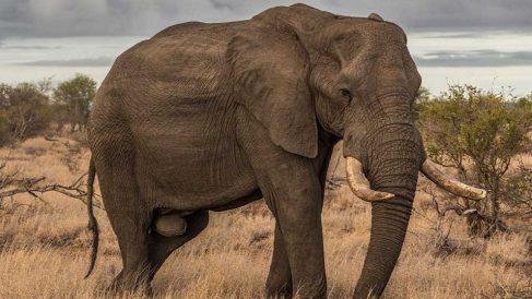 ¿Cuánto comen los elefantes al día