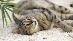 ¿Cómo corregir un mal comportamiento en tu gato?