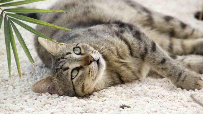 El comportamiento en tu gato