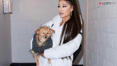 Ariana Grande podría estar en peligro