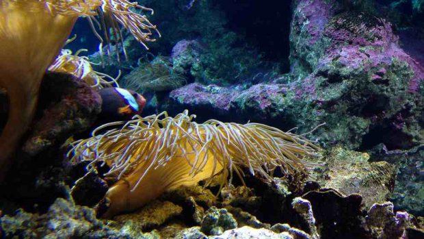 Evitar algas en el acuario
