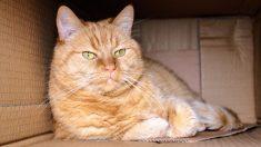 Tu gato y las cajas de cartón