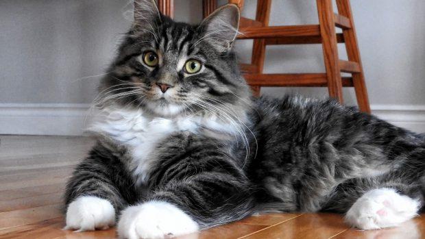 ¿Cómo tener un gato en tu piso?