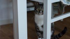 Pautas para tener un gato en tu piso