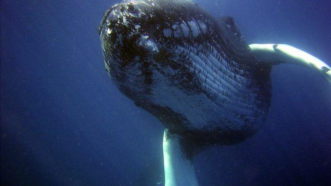 Alimentación de la ballena