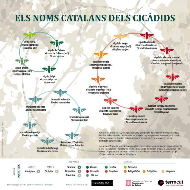 Infografía de las chicharras en catalán