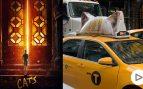 cats-nueva-york-estreno-cines