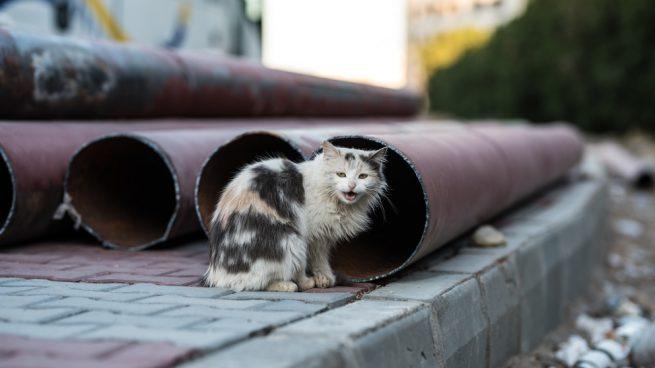 Curiosidades de las colonias felinas