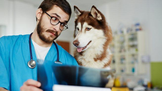 El escáner en veterinaria