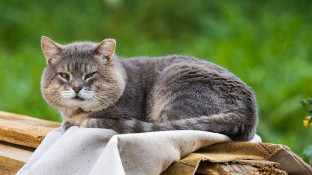 Síntomas de que tu gato es viejo