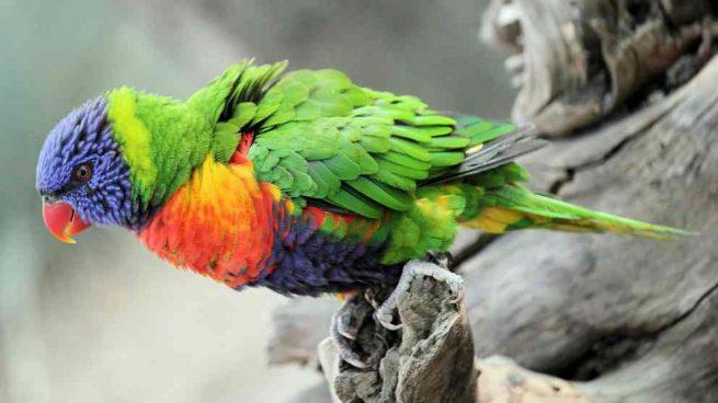¿Cómo cuidar pájaros exóticos en casa?