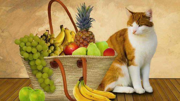 Alimentación saludable gato en casa