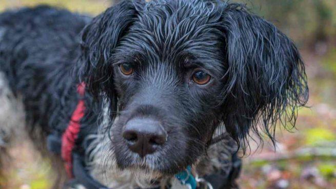 Perro mojado con lluvia