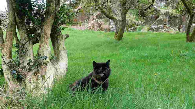 Actividades al aire libre gato