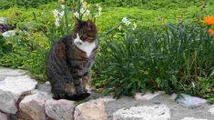Cosas que hacer al aire libre con tu gato