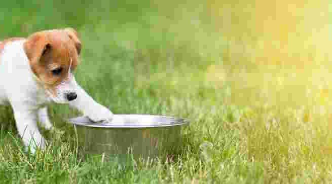 Comida para tus perritos cachorros