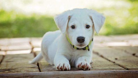 ¿Con qué edad comenzar a educar a tu cachorro?