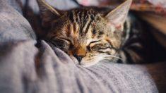 Lo que debes saber sobre la ansiedad en tu gato
