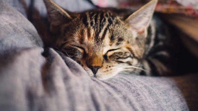 La ansiedad en tu gato