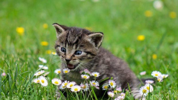 Gato ansiedad entre flores