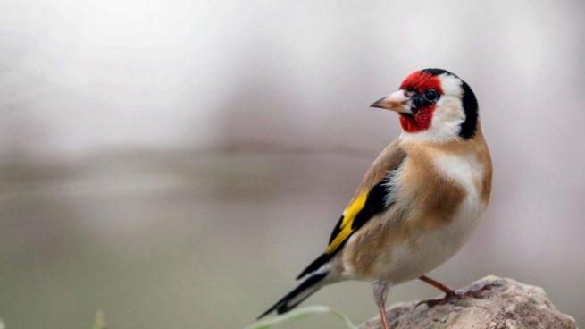 Mundo Animal y Espacios Naturales 5-consejos-para-adoptar-aves-como-mascotas-655x368
