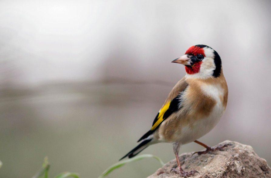 Curiosidades sobre las aves como mascotas