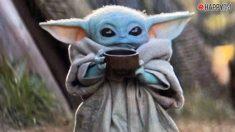 Baby Yoda es una sensación en redes sociales