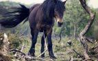Cepillado de la cola del caballo