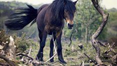 Cuidados necesarios de la cola del caballo