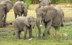 Las enfermedades de un elefante