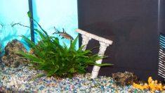 Tips para llenar tu acuario por primera vez