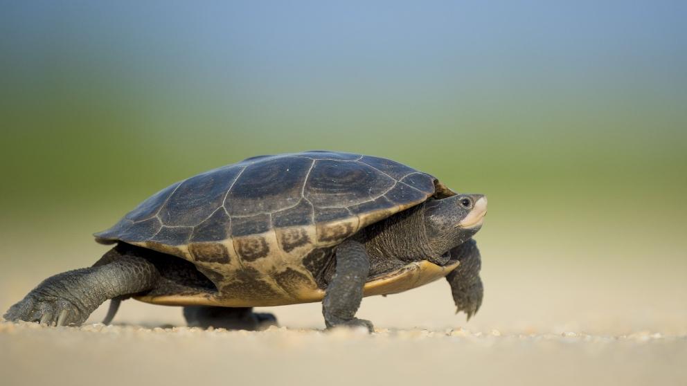 La tortuga y la supervivencia de la especie