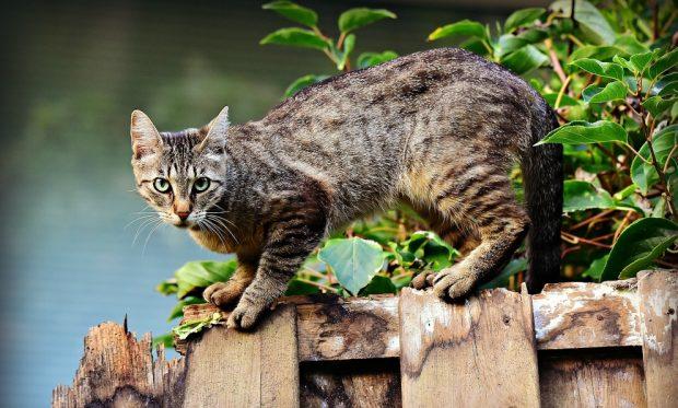 Gato y su educación
