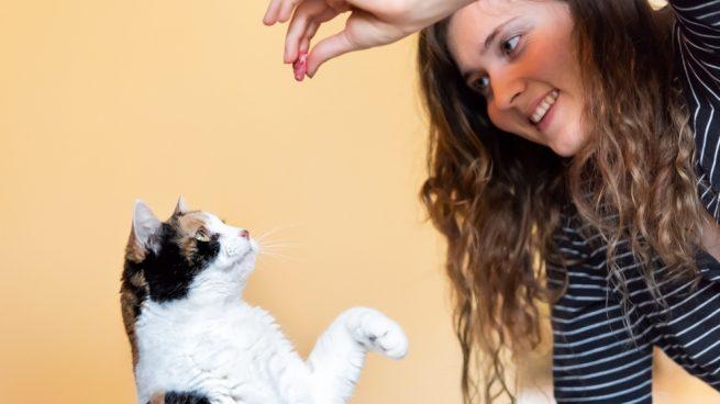 ¿Cómo debe ser la educación de tu gato?