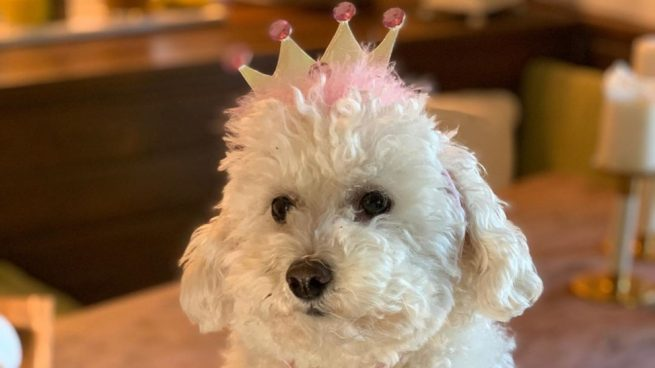 Instagram: Martina la perra de Paz Padilla triunfa en solitario