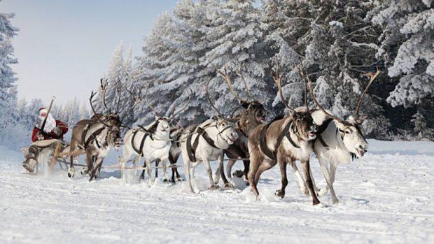 Renos de Papá Noel: Descubre cuántos son y cómo se llaman