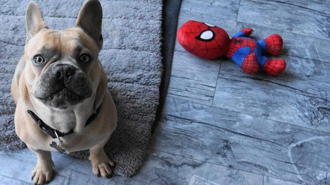 Perro con juguete