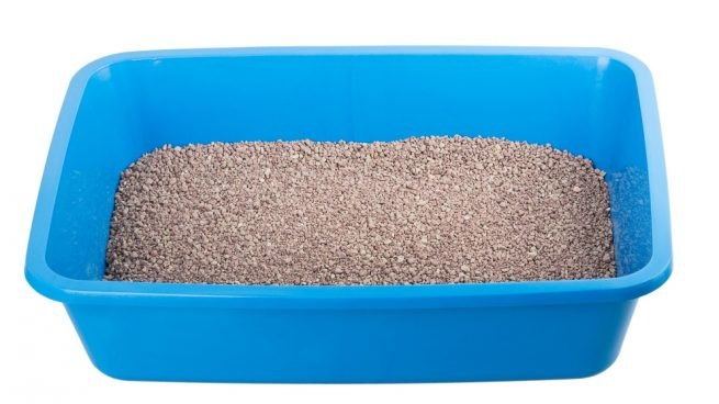 Tu perro y su caja de arena