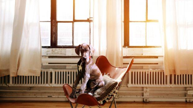 Tu perro y la calefacción