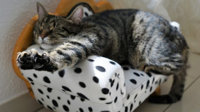 Gato tumbado alegre