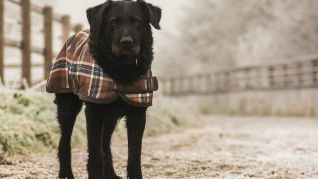 Cuidados de tu perro en invierno