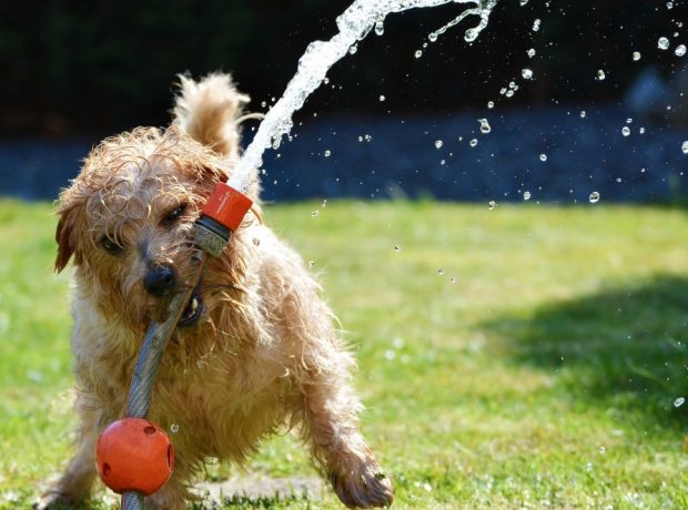 Perro se refresca en verano