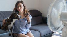 Tu mascota y los riesgos del aire acondicionado