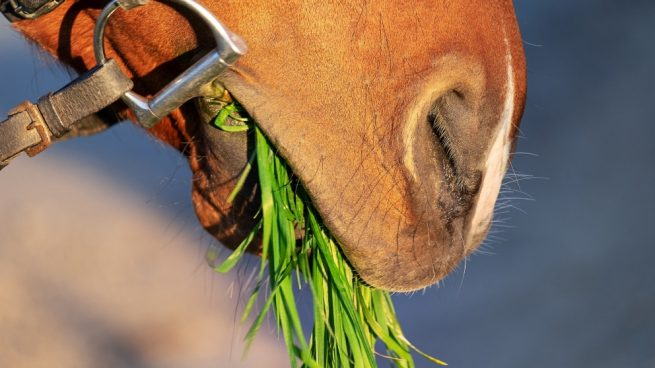 Complementos alimenticios del caballo