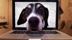 Riesgos de tu mascotas en redes sociales